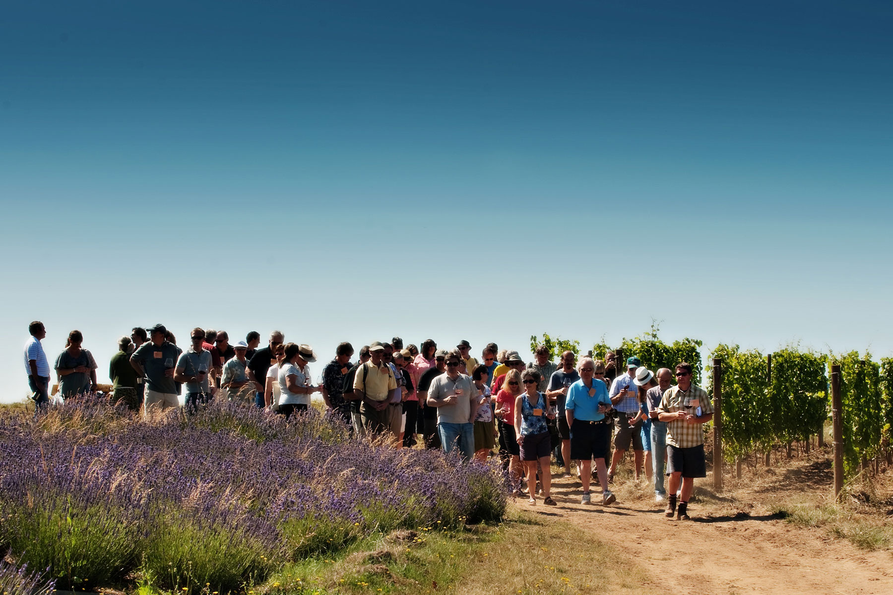 IPNC Vineyard Tour (CWK Photography)